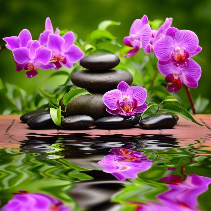 Цветы орхидеи и картинки